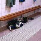 Comfort Step / Swimming Pool Matting
